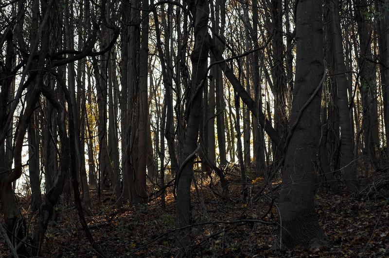 Late Autumn woods