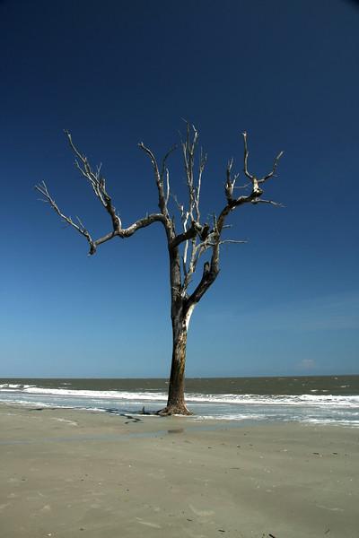 IMG_2916beach tree