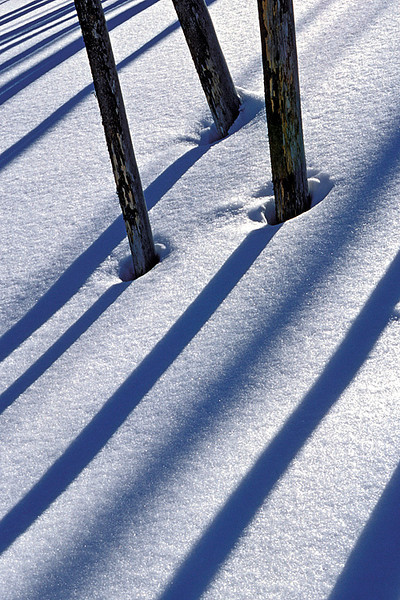 #46 Trees and Shadows 2, Yellowstone NP, WY