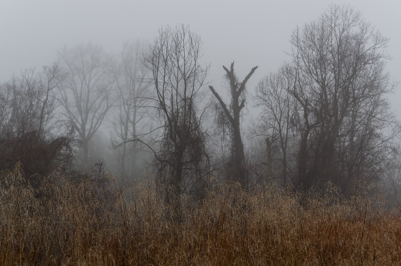Grass, trees and fog