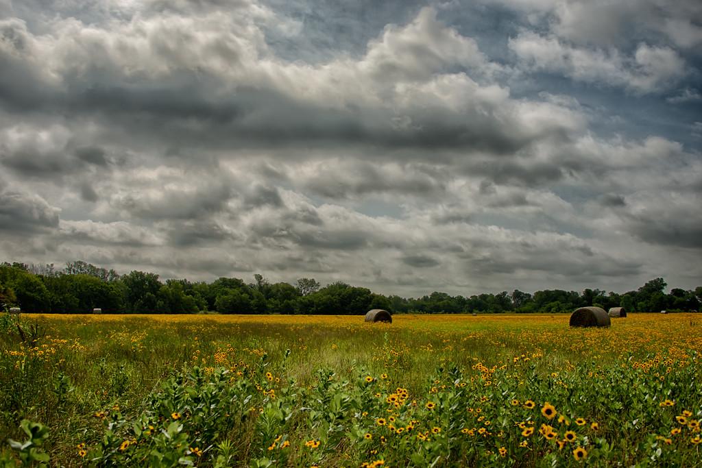 Yellow Hay Field