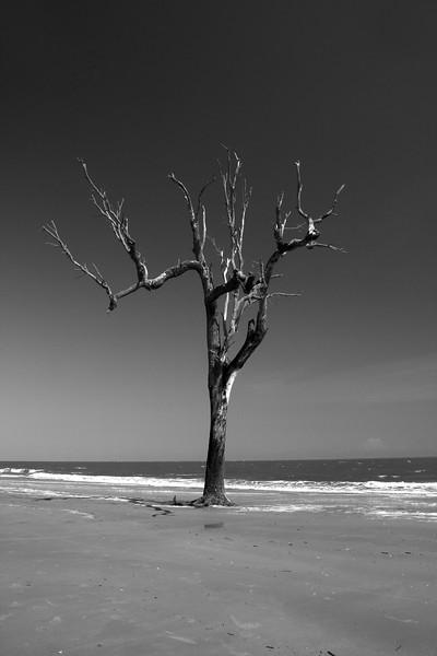 IMG_2916beach treeBW