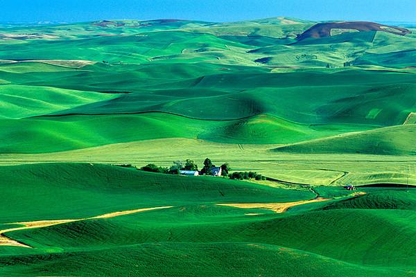 #40 Green Fields, Palouse, WA