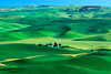 #40 Green Fields, Palouse, WA