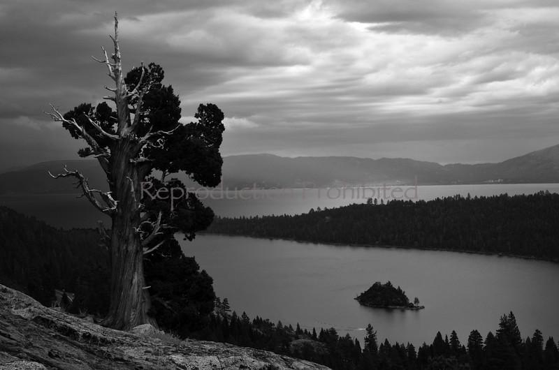 One Tree Emerald Bay, Lake Tahoe, CA September 2013