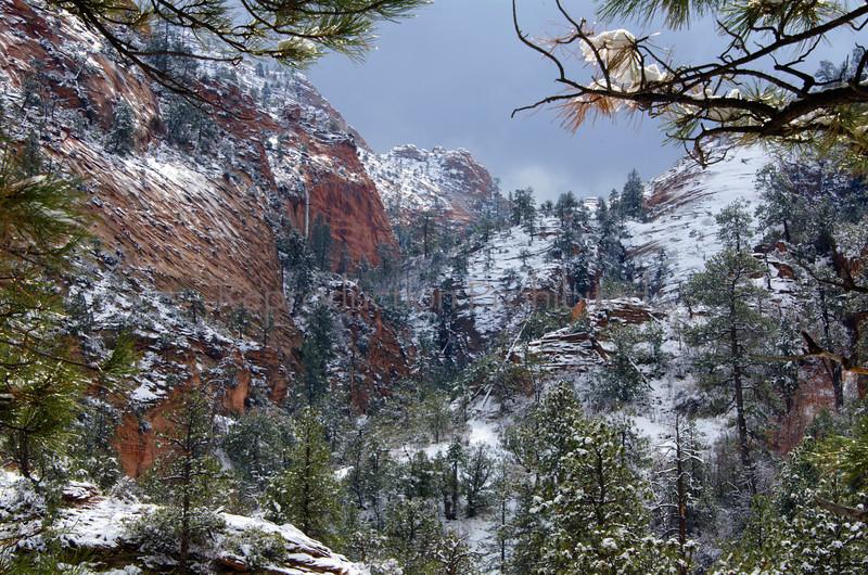Paradise Zion National Park, Utah December 2012