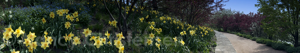 Spring Walk - Panoramic