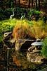 """Pond Adornment #2"""