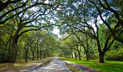 """""""Oak Avenue #1"""""""