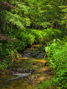 """Quiet Shaded Brook"""