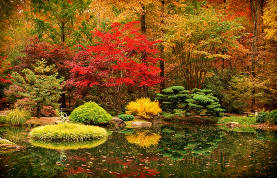 """Autumn in the Japanese Garden"""