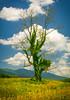 """Encrusted Tree"""