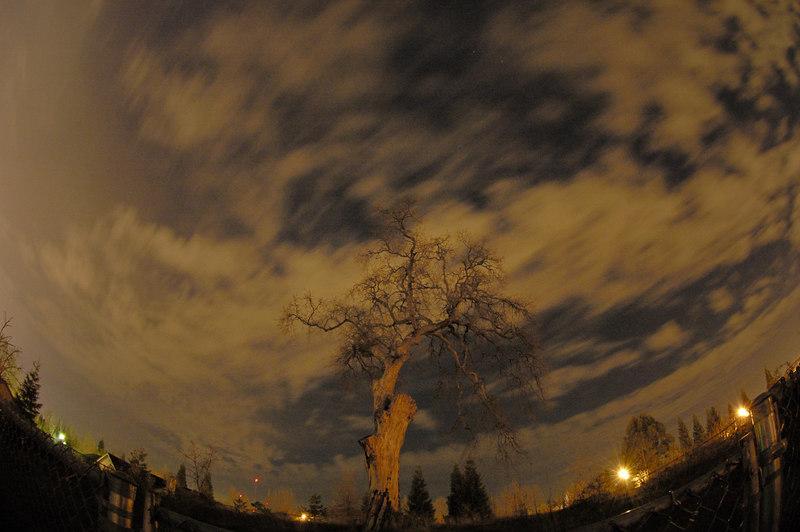 Oak Tree - 30 second night exposure