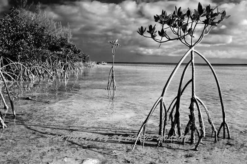 Bahamas_01-04-11_0046