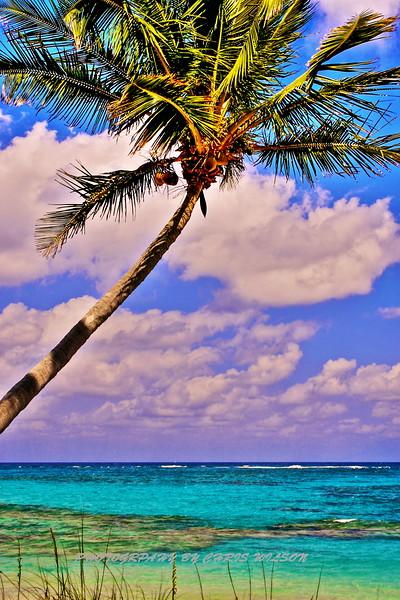 Bahamas Palm HDR