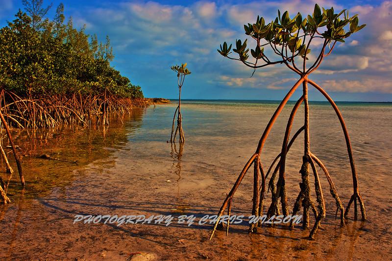Bahamas Salt Flat HDR 1