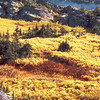 Alaskan fall, 1999<br /> Film Photography