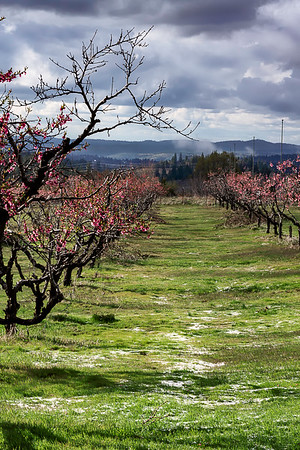 Apple Hill Orchard - Camino