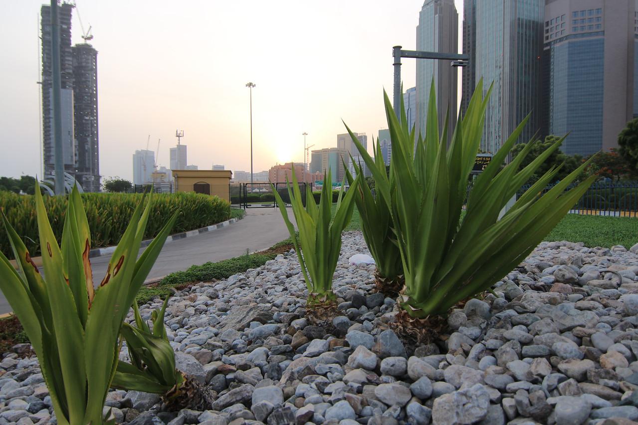 IMG_7327_Sunrise Corniche_014