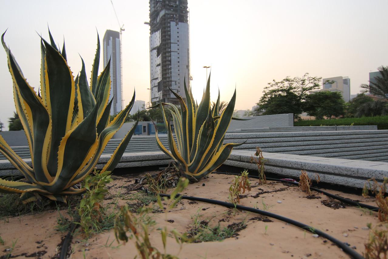 IMG_7335_Sunrise Corniche_021