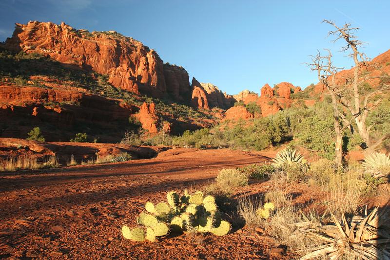 Arizona 008