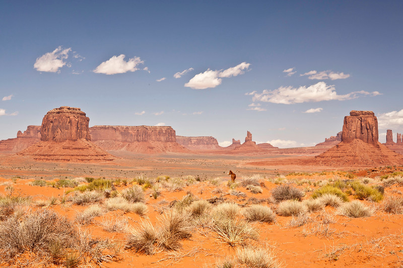 Monument Valley Indian Pony
