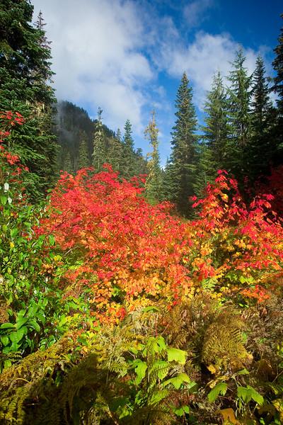 Rachel Lake trail