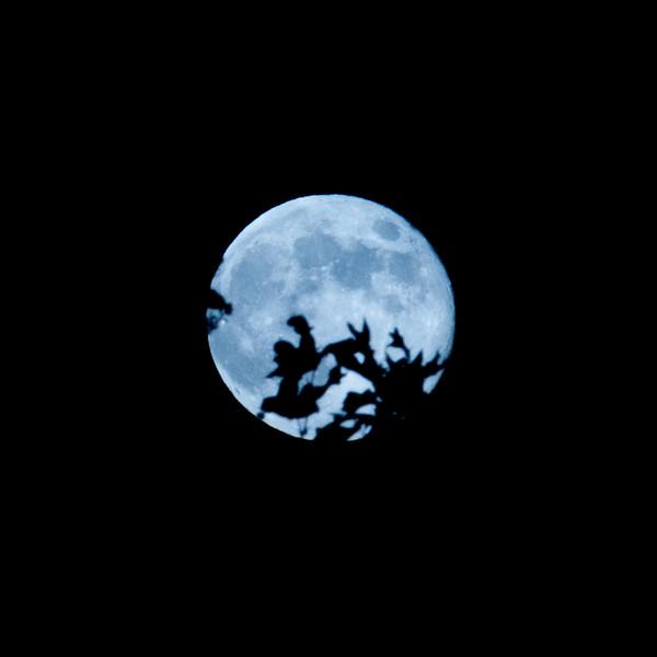 No, that's not E.T. in front of the moon, it's sycamore leaves.  (or is that oak?)