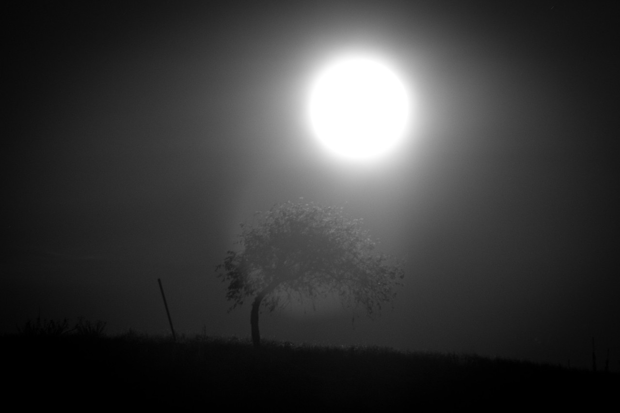 By the time I got the lens switched over to the OM-D, the moon had already risen over the tree.