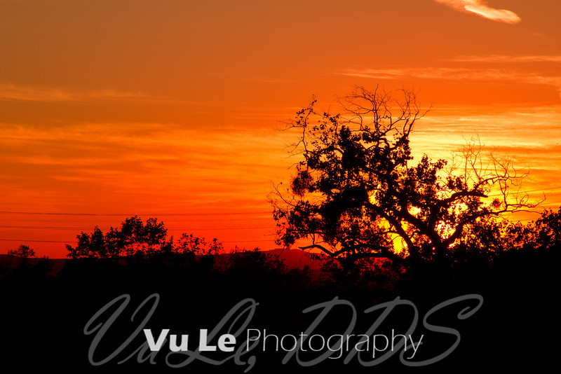 I've been wanting to shoot a sunset with this tree in it for months