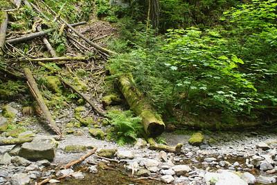 Goldstream Park, Vancouver Island, BC, Canada