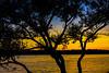 Tree, Lake, Sunset