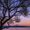 Purple Rainier