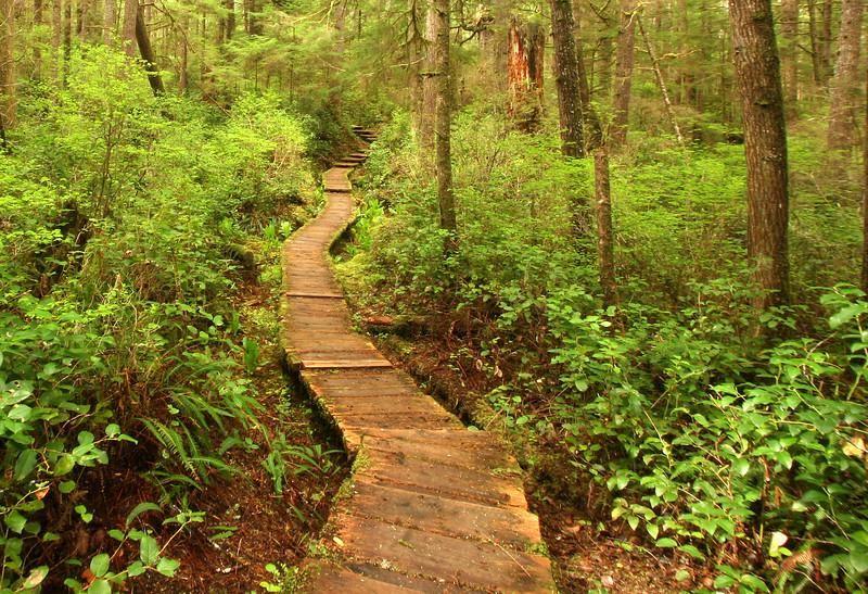 Boardwalk from Lake Ozzette to Cape Alava. Washington State