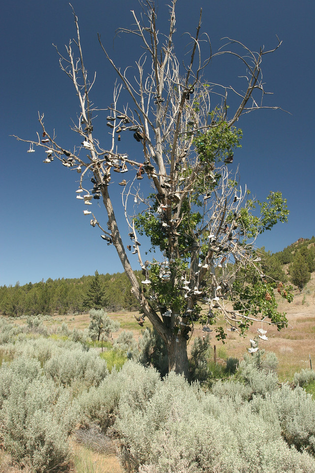 "Driving west bound on highway 26 near Mitchell Oregon, I came across this tree in the middle of nowhere, full of shoes. There was a small hand written sign stating "" Bearing tree, no peaches or cherries. Just a few pairs""."