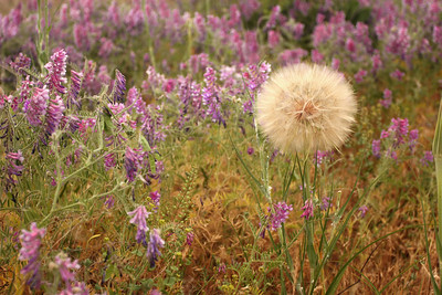 Weeds or Wild Flowers