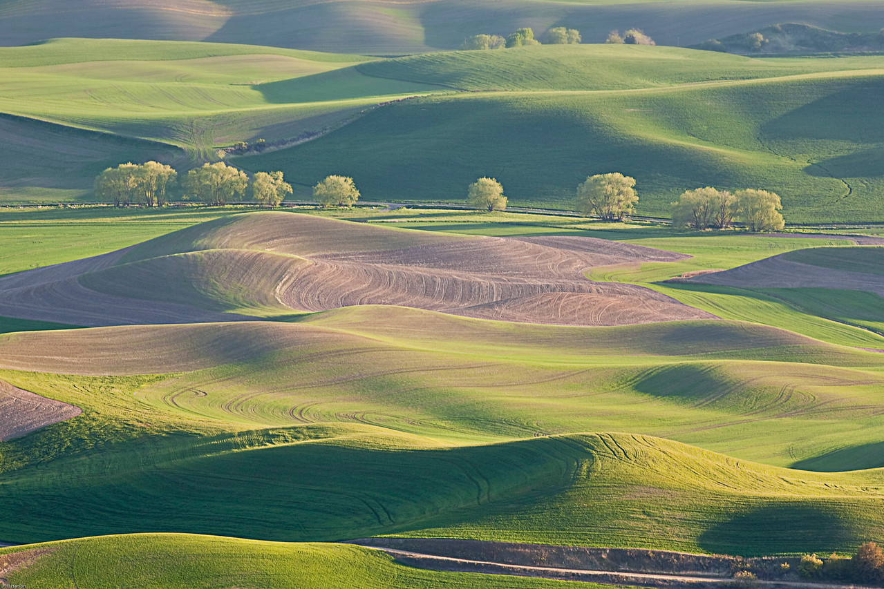 Palouse Evening2