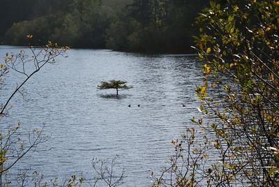 Fairy Lake, BC, Canada