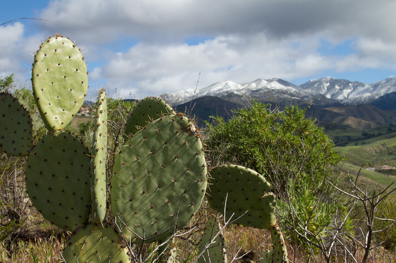 The juxtaposition of cactus and snow topped mountain
