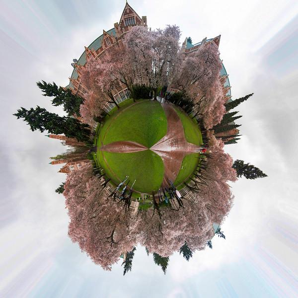 Little Cherry Blossom Planet