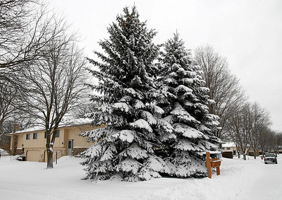 One of the neighbors down the road had some splendid pine trees!