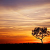 Lone Tree Sunset
