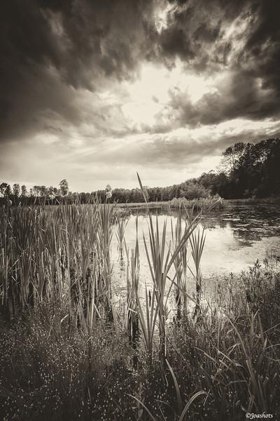 Allegan County, MI 2013