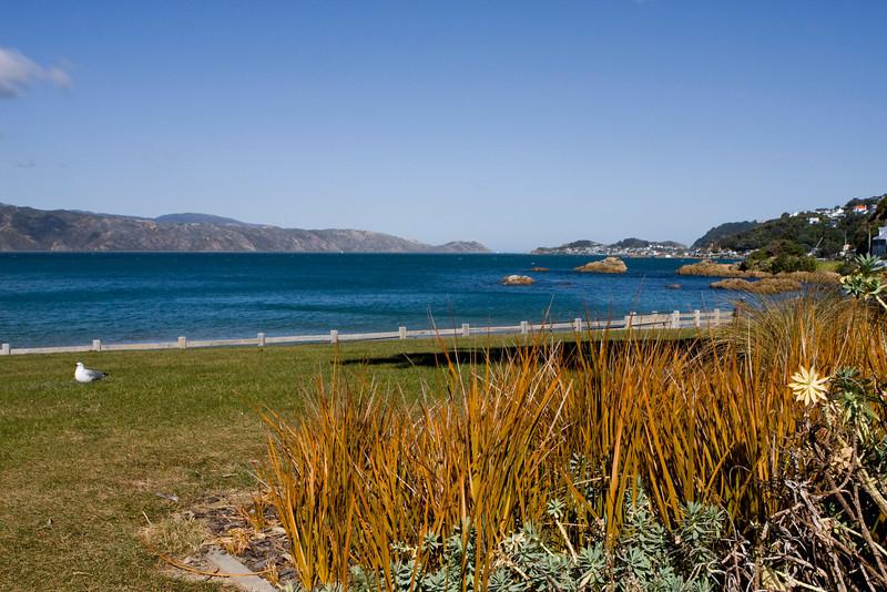 IMG#8504 Wellington, New Zealand