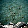 Lagerman Reservoir.