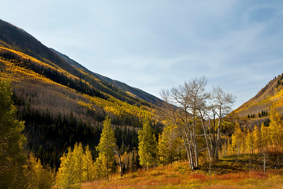 Fall color and mountainside near Aspen, Colorado