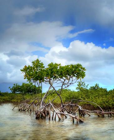 mangrove paradise.