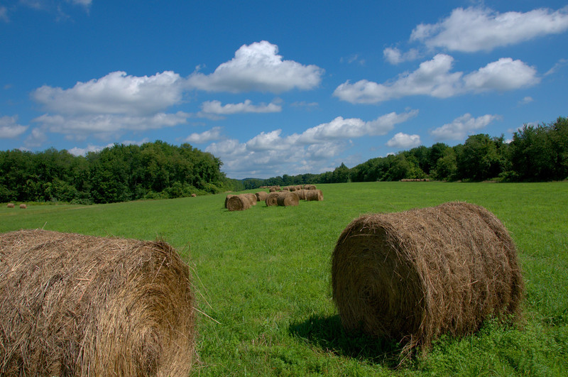 Rolling Hay