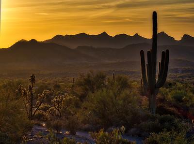Sauguaro Sunset
