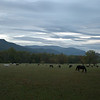 Horses at Cades Cove, Smoky Mountains, Tennessee